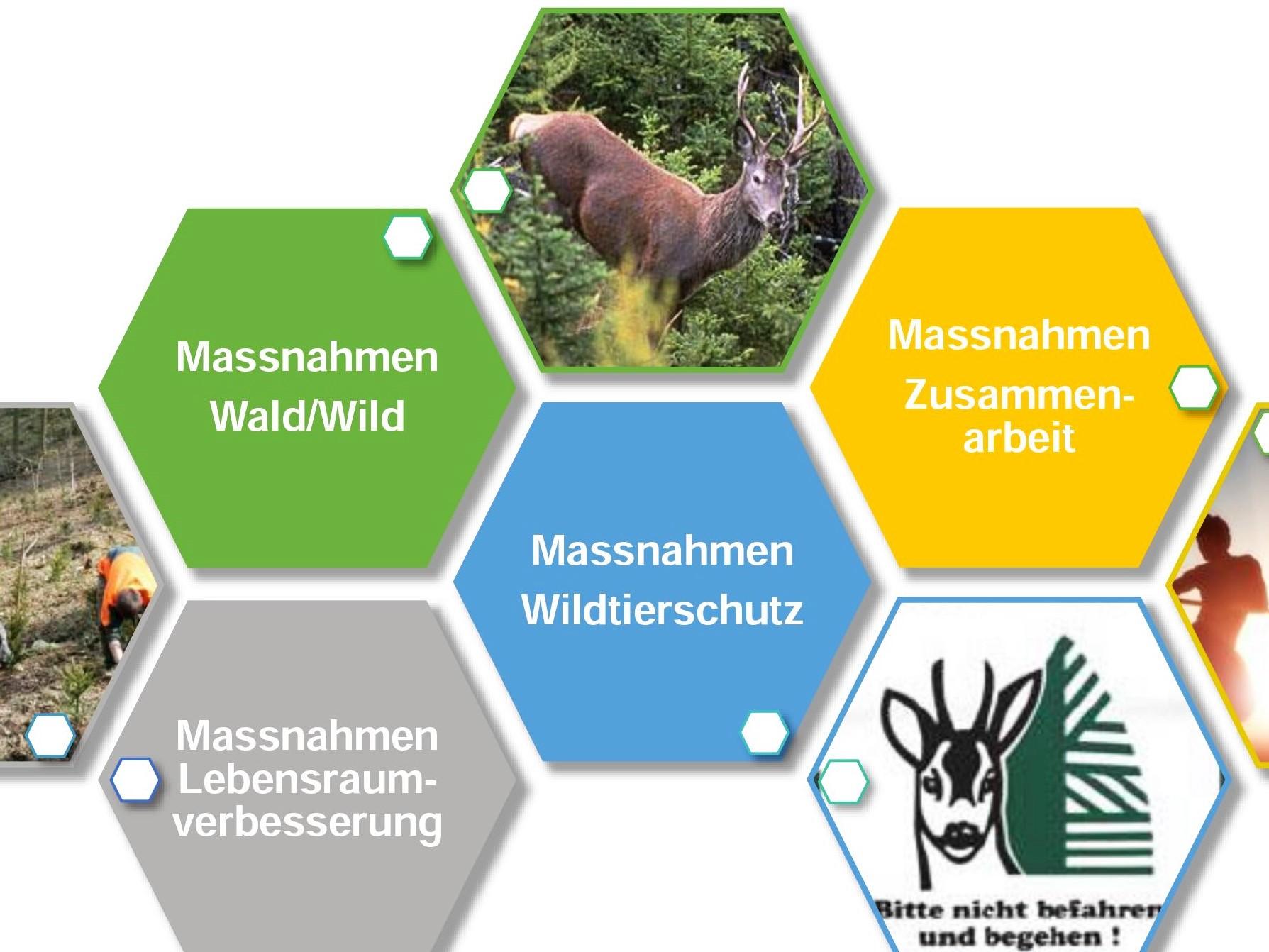 W1_Wald-Wild-Rigi